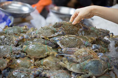 Fresh blue crab customer choose raw material. In fresh market Royalty Free Stock Images