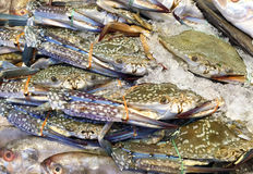Fresh blue crab or horse crab on ice in the market. In Thailand Stock Photo