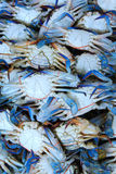 Fresh blue crab in Thailand Royalty Free Stock Image