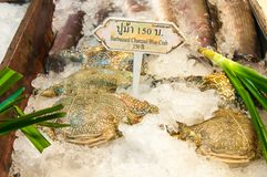 Fresh blue crabs on ice. In Bangkok, Thailand Royalty Free Stock Photos