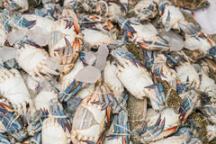 Fresh blue crabs at the market Royalty Free Stock Photos