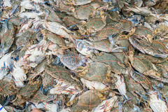 Fresh blue crabs at the market Stock Images