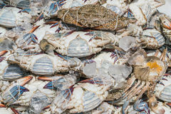 Fresh blue crabs at the market Stock Photography