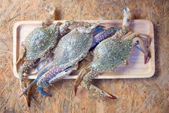 Fresh blue crabs on wood tray. From seafood market in Thailand Stock Photo