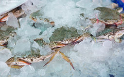 Fresh blue craps in the ice, sea food in Thailand's market Royalty Free Stock Image