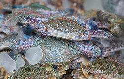 Fresh blue craps in the ice, sea food in Thailand's market Stock Images