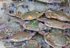 Fresh blue craps in the ice, sea food in Thailand's market Royalty Free Stock Photography