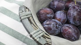 Fresh blue damson plums in lovely gray wicker basket on top of stripped cloth towel. Representation of Autumn Harvest. stock photo