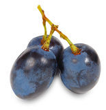 Fresh blue grape fruit Royalty Free Stock Photography