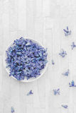 Fresh blue Hyacinth flowers floating in water Royalty Free Stock Photography