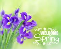 Blue irise flowers stock images
