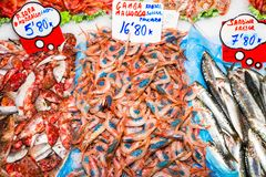 Fresh shrimps for sale at fish market, Palma de Mallorca. Fresh blue leg red shrimps on ice. Fresh seafood red shrimps for sale in the famous tourist attraction Royalty Free Stock Image