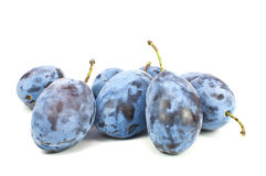 Fresh blue plums Stock Images