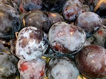 Fresh blue plums close-up. Close-up Royalty Free Stock Photo