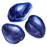 Fresh blue plums isolated, watercolor painting Royalty Free Stock Photo