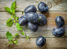 Fresh blue plums Royalty Free Stock Image