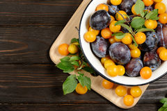 Fresh blue yellow plums in metal bowl on dark wooden table. Stock Image