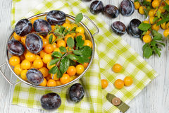 Fresh blue yellow plums in metal bowl on white wooden table. Royalty Free Stock Photography