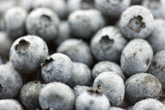 Fresh blueberries. Wet natural blueberries background in macro shot Stock Images