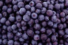 Fresh blueberries Stock Images