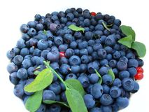 Fresh blueberries. With green leaves Royalty Free Stock Image