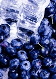 Fresh blueberries. Blueberries are a group of flowering plants in the genus Vaccinium, sect. Cyanococcus. The species are native to North America and eastern Royalty Free Stock Photo