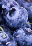 Fresh blueberries. Blueberries are a group of flowering plants in the genus Vaccinium, sect. Cyanococcus. The species are native to North America and eastern Royalty Free Stock Images