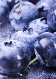Fresh blueberries. Blueberries are a group of flowering plants in the genus Vaccinium, sect. Cyanococcus. The species are native to North America and eastern Stock Photography
