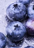 Fresh blueberries. Blueberries are a group of flowering plants in the genus Vaccinium, sect. Cyanococcus. The species are native to North America and eastern Royalty Free Stock Image