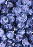Fresh blueberries. Blueberries are a group of flowering plants in the genus Vaccinium, sect. Cyanococcus. The species are native to North America and eastern Royalty Free Stock Photography