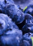 Fresh blueberries. Blueberries are a group of flowering plants in the genus Vaccinium, sect. Cyanococcus. The species are native to North America and eastern Stock Photo