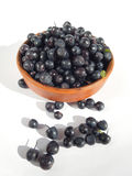 Fresh blueberries. Royalty Free Stock Photography