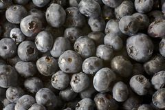 Fresh Blueberries. Close up photo of fresh blueberries Stock Photo