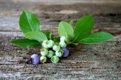 Free Fresh Blueberries Royalty Free Stock Image - 5555666
