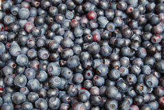 Fresh blueberries background. Background of fresh forest blueberries Royalty Free Stock Photos