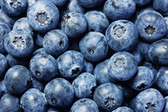 Fresh blueberries background Royalty Free Stock Image