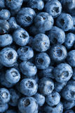 Fresh blueberries background Royalty Free Stock Images