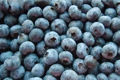 Fresh blueberries background Stock Image
