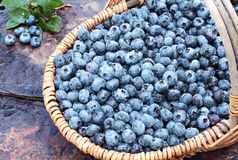 Fresh Blueberries in a Basket. Fresh picked organic blueberries in a basket on a rustic slate background. Shallow depth of field with some blur on handle Royalty Free Stock Photo