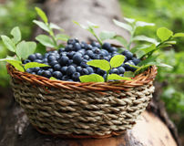 Fresh blueberries in a basket. Fresh blueberries placed in a basket, natural concept Royalty Free Stock Photos