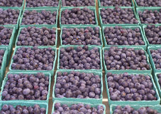 Fresh Blueberries in Baskets on Display in a Farmers Market. Grown in Corbett, Oregon, United States. Horizontal looking down and across rows of green baskets stock image