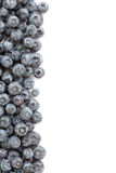 Fresh Blueberries Border Royalty Free Stock Photo