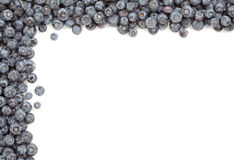 Fresh Blueberries Border Stock Images