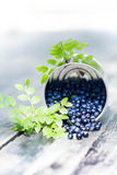 Fresh  Blueberries in a bowl jar with leaves on wooden old dark Royalty Free Stock Photo