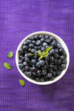 Fresh blueberries in a bowl Royalty Free Stock Images