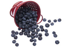 Fresh Blueberries in a Bright Red Colander Stock Photo