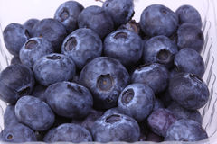 Fresh Blueberries. A bunch of fresh blueberries in a container Royalty Free Stock Photo