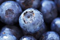 Fresh Blueberries close-up Royalty Free Stock Photography