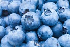 Fresh blueberries - close up studio shot Royalty Free Stock Image