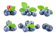 Fresh blueberries consists of different images. royalty free stock photos